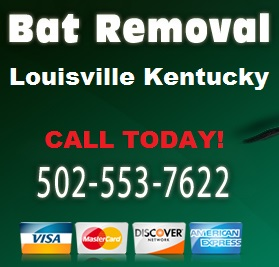 Louisville Bat Removal Kentucky