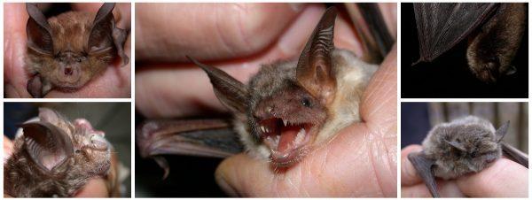Louisville Bat Control 502-553-7622