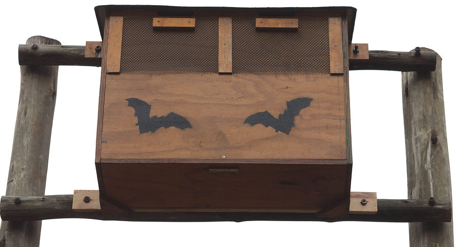Bat Removal Services Louisville