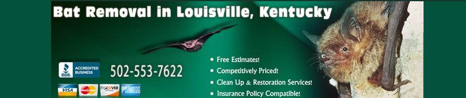 Bat Removal in Louisville, Kentucky
